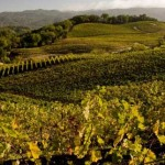 Napa & Sonoma Wine Education Tour