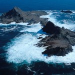 Farallon Islands Whale Watch and Natural History Tour